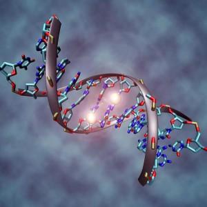 DNA-1